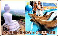 Dolphin Show and 2 Temples