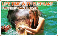 Life time with Elephant